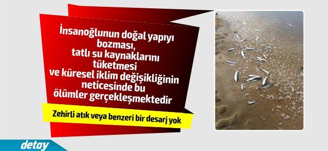 Sarıçizmeli Bafra'daki balık ölümleri ile ilgili açıklama yaptı