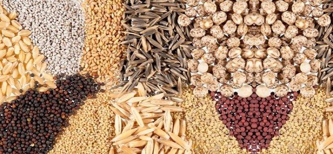 Artık tohumlar takas edilip, çoğaltılabilecek