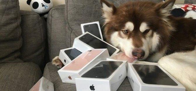 Çinli milyarder, oğlunun köpeğine 8 tane iPhone 7 aldı!