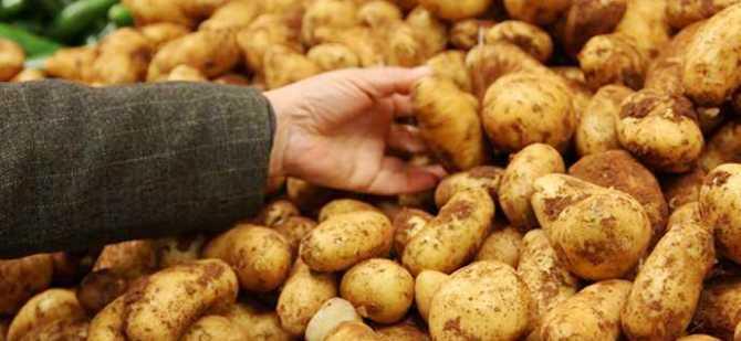 İlkbahar patatesi askı listelerindeki bulgulara 2 Temmuz'a kadar itirazda bulunulabilecek