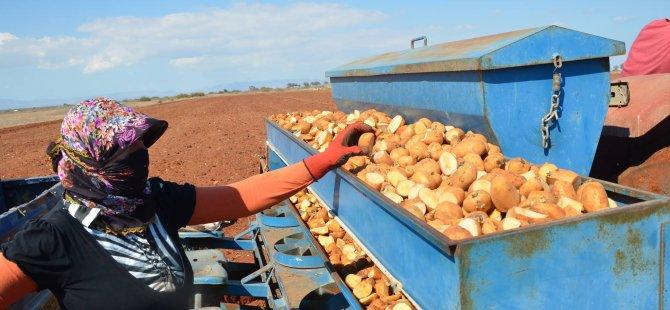 """""""Patates yetiştiriciliği ve bitki besleme üzerine eğitimler"""""""