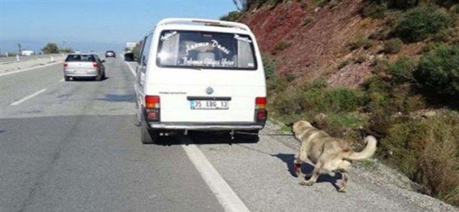 Köpeğe işkence yapan 'insan'a hapis cezası