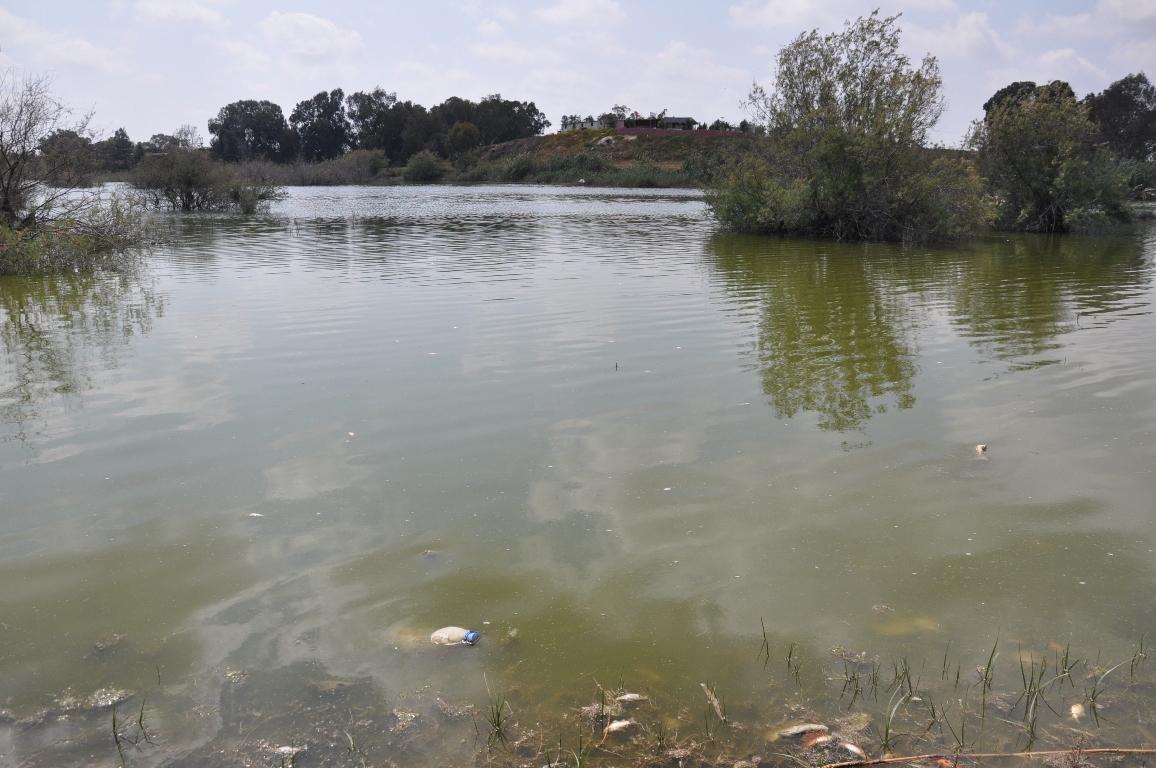 Çanakkale göletinde balıklar ölüyor…