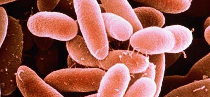 15 Yaşındaki genç, bakterileri yalnız olduklarına inandırarak huylarını değiştirdi