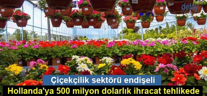 Çiçekçilik sektörü endişeli; Hollanda'ya 500 milyon dolarlık ihracat tehlikede