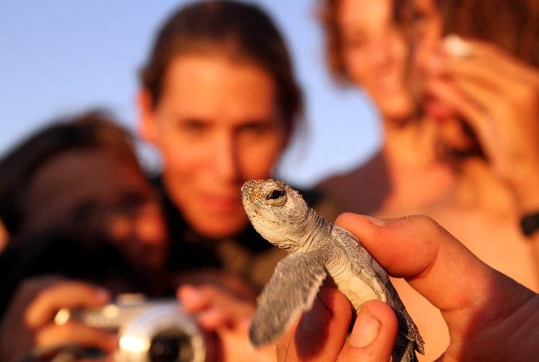 Deniz kaplumbağalarına 'Kurtarma Merkezi'