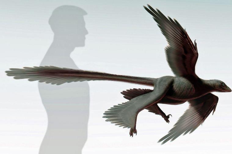 Çin'de dört kanatlı dinozor bulundu