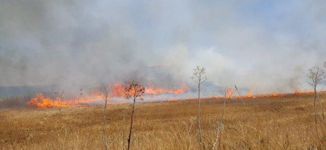 Pirgo'daki yangın söndürüldü... 10 hektarlık alan yandı