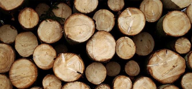 Odun alacak olan vatandaşa uyarı: Faturasız odun almayın!