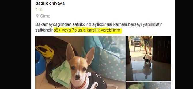 Sosyal Medyada akılalmaz olay: Telefona karşılık köpek!