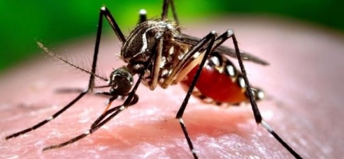 Kuzey Kıbrıs'ta sıtma iddiası