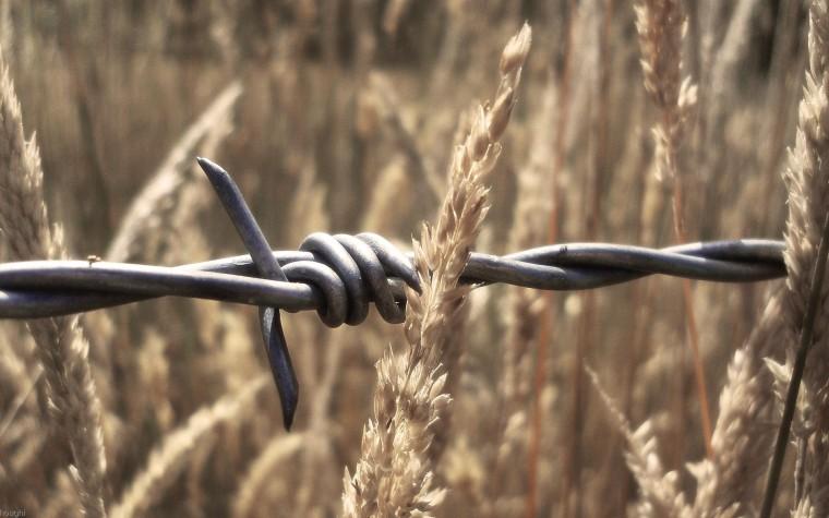 Barış arayışı sürüyor