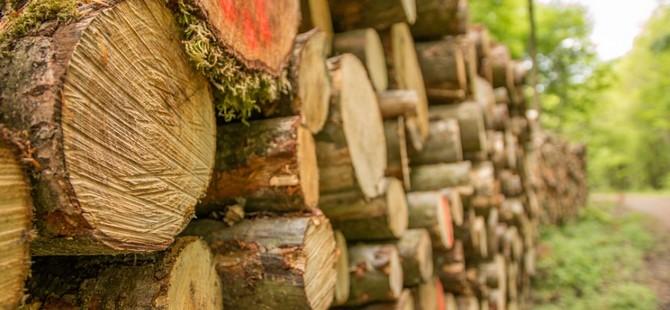 Ormancılar, kaçak ağaç kesimine karşı caydırı ceza talep etti