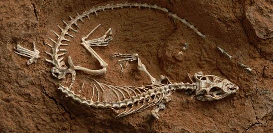 23 milyon yıllık kertenkele fosili bulundu