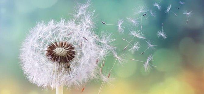 Polen alerjisi nedir?