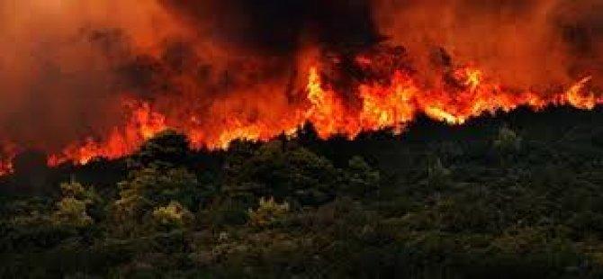 Yunanistan'daki orman yangınında ölü sayısı 60'ı aştı