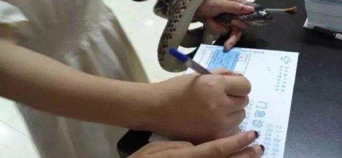 Çin'de bir kadın, kendisini sokan yılanı yakalayarak hastaneye götürdü