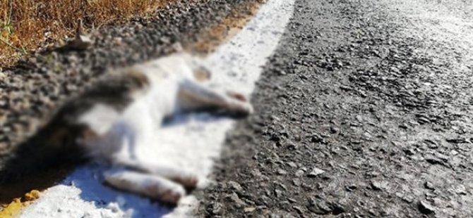 Cansız kedinin üstüne yol şeridi çektiler