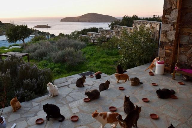 Euro ile maaş verilecek kedi bakıcısı aranıyor