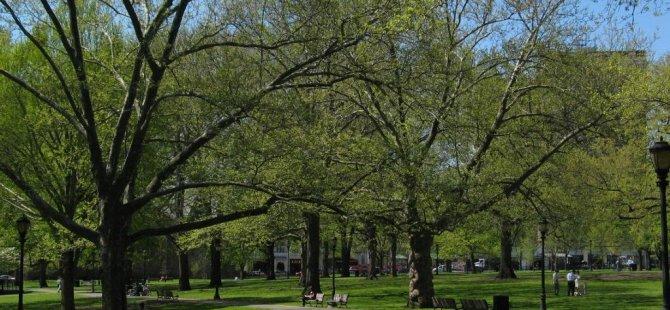 Aynı parkta sentetik esrar içen 76 kişi  hayatını kaybetti