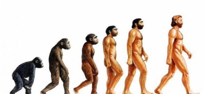 Modern insanın en son o uzvu evrildi