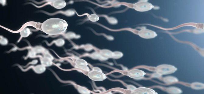 Sperm kalitesini artıran ve azaltan faktörler!