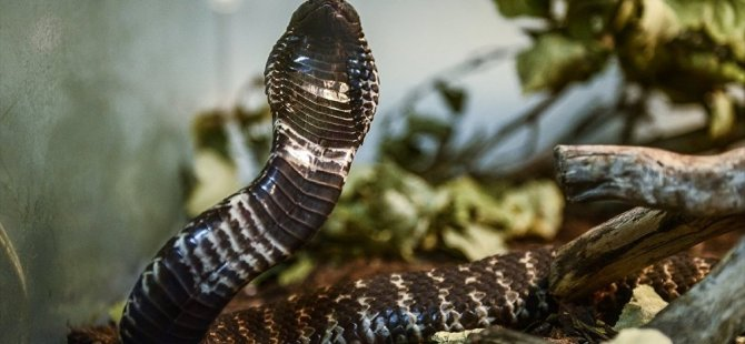 Hindistan'da sel sonrası yılan uyarısı