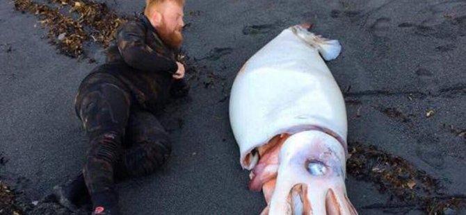 Yeni Zelanda'da kıyıya vurmuş dev mürekkep balığı bulundu