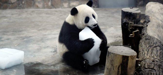 Lady Gaga ve dev bir panda: Cuma'nın en iyi fotoğrafları