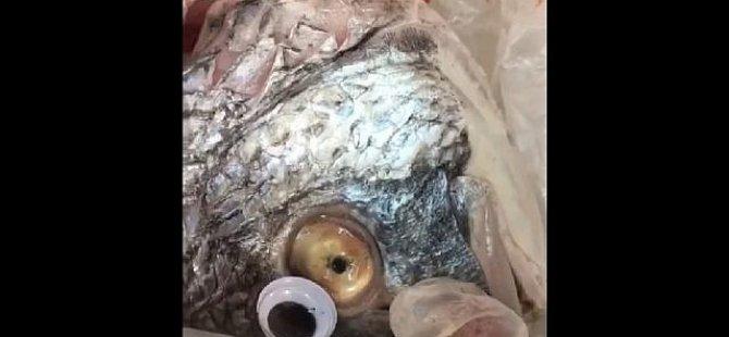 Bayat balıklara taze görünsün diye oyuncak göz taktı, yakayı ele verdi