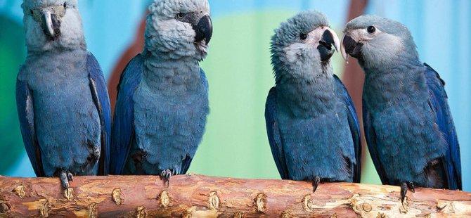 8 kuş türü 18 yılda yok oldu