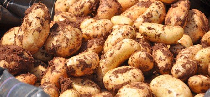 "KKTC'li Üreticilerden Niğde'de ""Patates Enstitüsü""ne ziyaret"