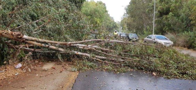Rüzgardan Mağusa'da ağaç dalları kırıldı