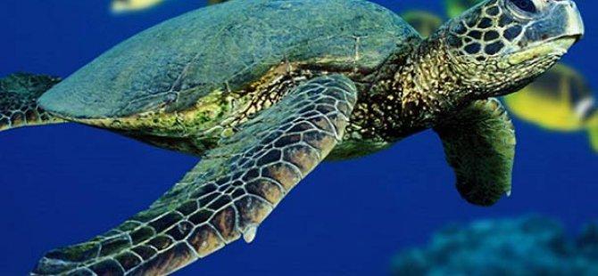 Çevre Koruma Dairesi, kaplumbağa baskılı okul çantası dağıtacak