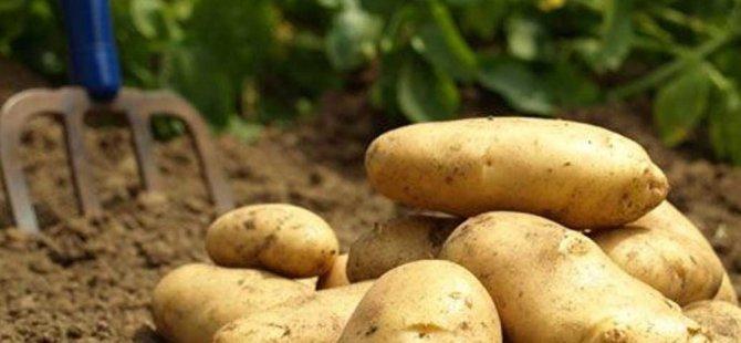 Güney Kıbrıs'ta tonlarca patates suya gömüldü
