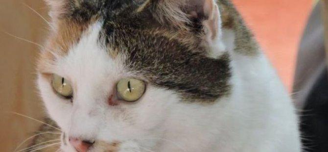 """3 yıldır araştırıyorlardı: """"Kedi seri katili"""" bulundu"""
