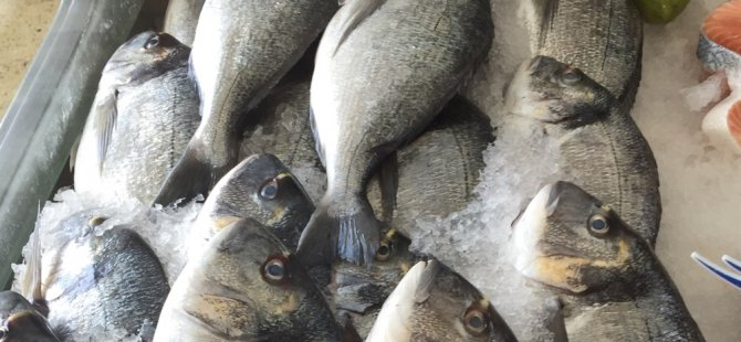 Ziraat Mühendisleri Odası: Çipura balığı konusunda tüketici yanıltılıyor