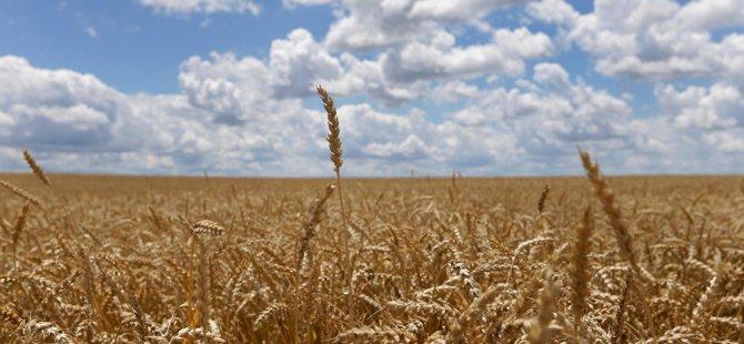 Türkiye, ilk kez Rusya'dan ruble ile buğday alacak