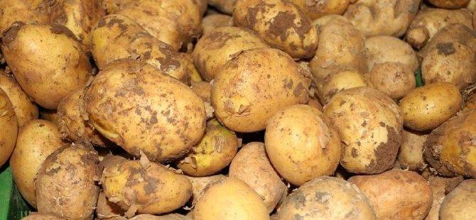 Ağustos'ta patates ekilen arazilerin beyanlarının yapılması için bugün son gün