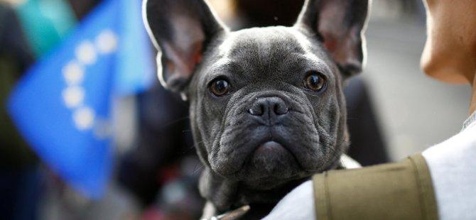 Köpeklerin 'fazla havlaması' yasaklandı