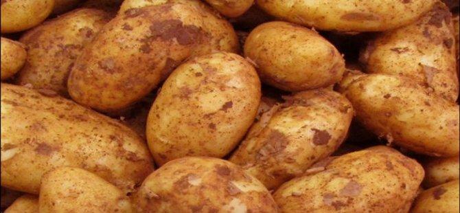"""Patates 10-12 TL, ithalde ise """"MANTAR"""" çıktı!"""