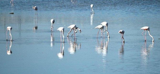 Flamingolar gelmeye başladı