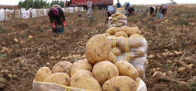 KKTC'de bir kilo patates 25 lira