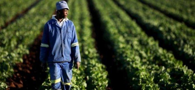 Güney Afrika: 'Beyaz azınlığın elindeki topraklar tazminatsız kamulaştırılacak'