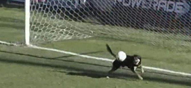 Futbol sahasına giren köpek gol kurtardı