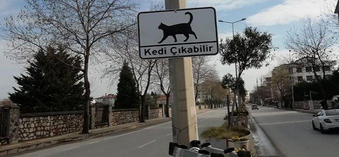 Belediyeden 'kedi çıkabilir' tabelaları