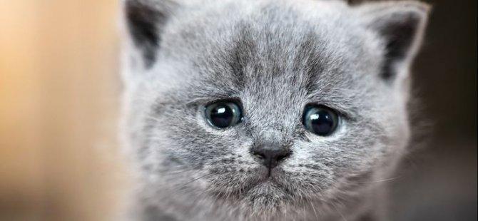 Kedi, 17. yüzyıldan kalma nadide bir tabloya zarar verdi