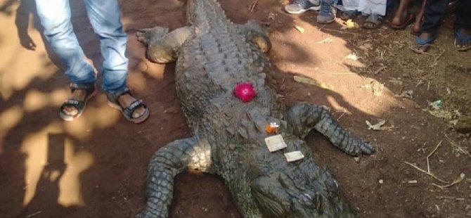 Hindistan'da bir timsahın cenazesine 500 kişi katıldı