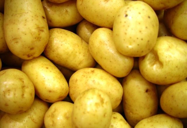 Patates üreticileri; dikkat! Listeler askıya alınıyor....