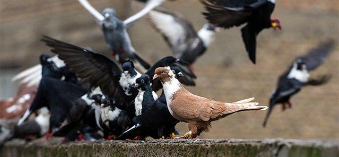 Ev ve araba fiyatına güvercinler 'otelde konaklıyor'